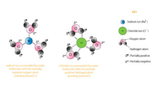 sodium and chloride ion each surrounded by water molecules dissolved sodium  chloride